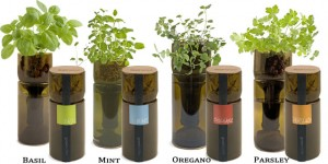 GrowBottle  -Grow Some Fresh Herbs